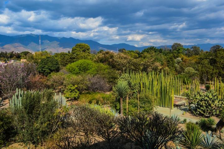 19 Jardín Etnobotánico de Oaxaca