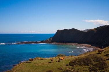 Las vacas con mejores vistas del planeta - Gipuzkoa